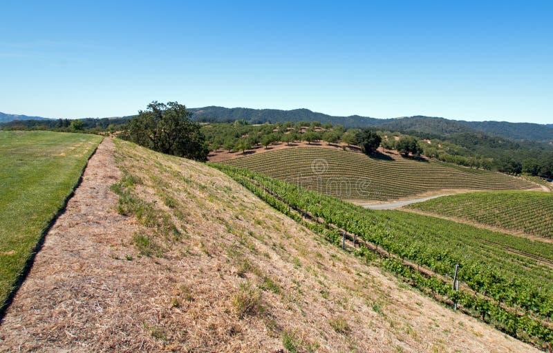 俯视Paso罗夫莱斯葡萄园的小山在加利福尼亚中央谷地  免版税图库摄影