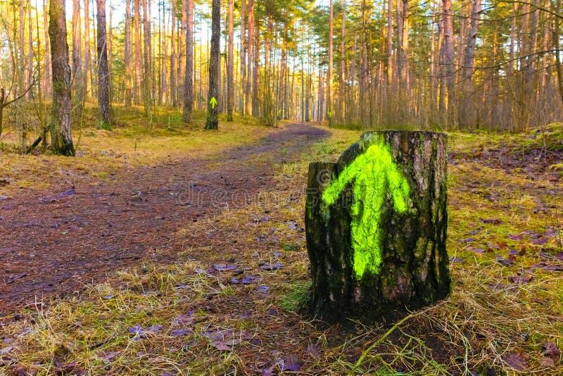 绊倒与在木头的一个绿色箭头 免版税库存图片