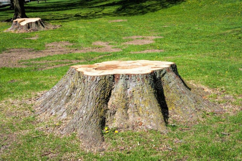 击倒的树树桩  库存图片