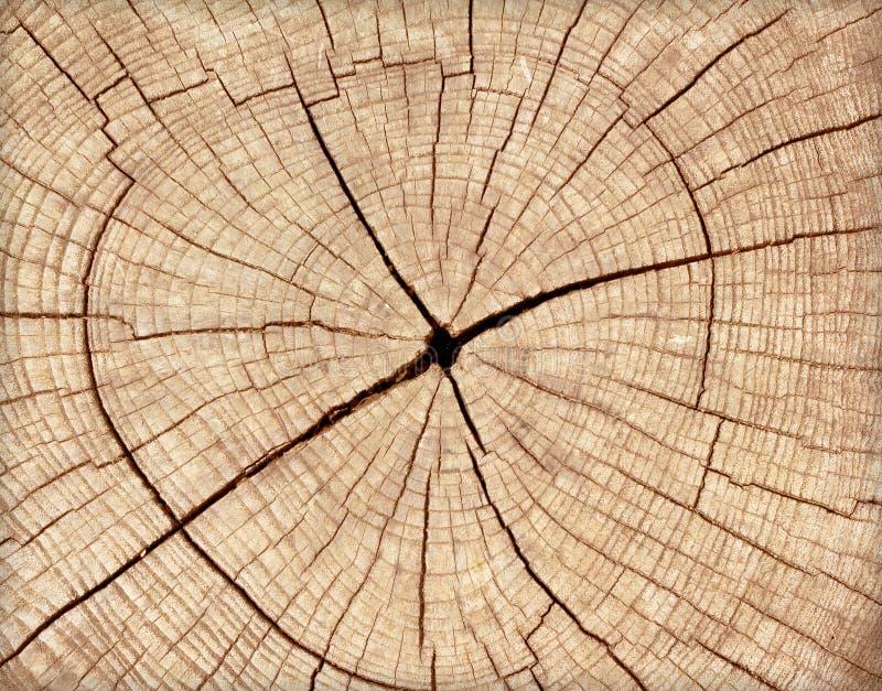 击倒的结构树树桩 免版税库存图片