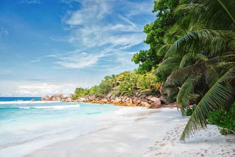 倒空与可可椰子树的热带海滩,拉迪格岛,塞舌尔群岛 免版税库存图片