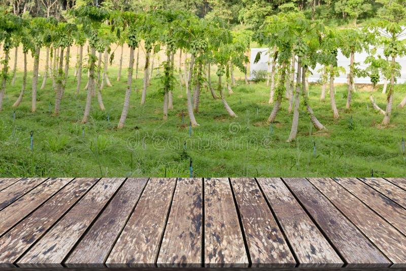 倒空木板有番木瓜农场的空间站 免版税库存照片