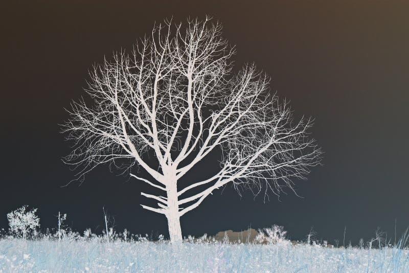 倒置在草原的光秃的树 免版税库存照片