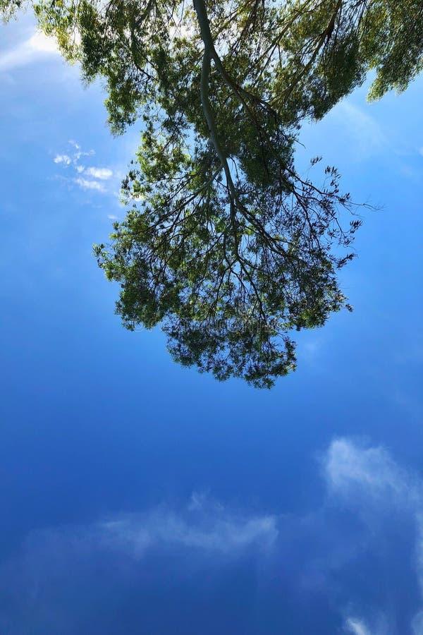 倒置的树和天空 库存图片