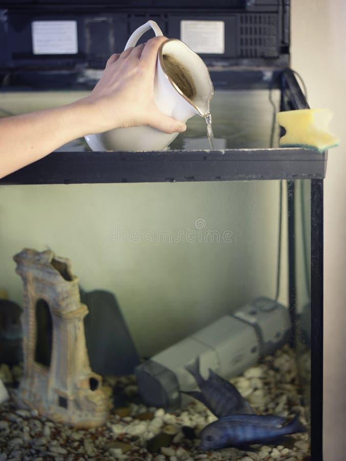 倾吐的水到鱼缸里 免版税库存照片