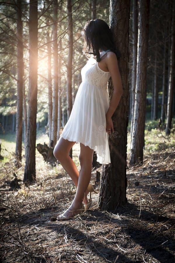 倾斜反对树的年轻美丽的印地安妇女在森林里 免版税图库摄影