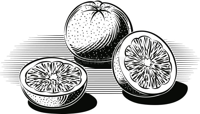 倾斜反对桌的葡萄柚 库存例证