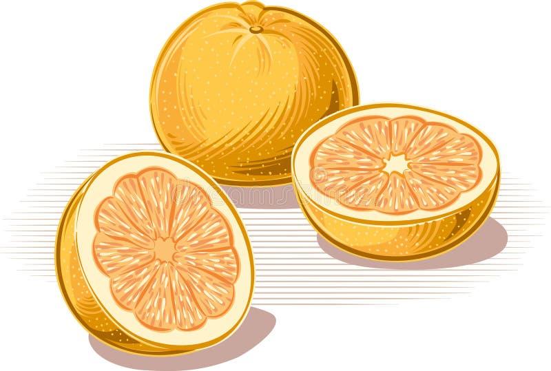 倾斜反对桌的葡萄柚 皇族释放例证