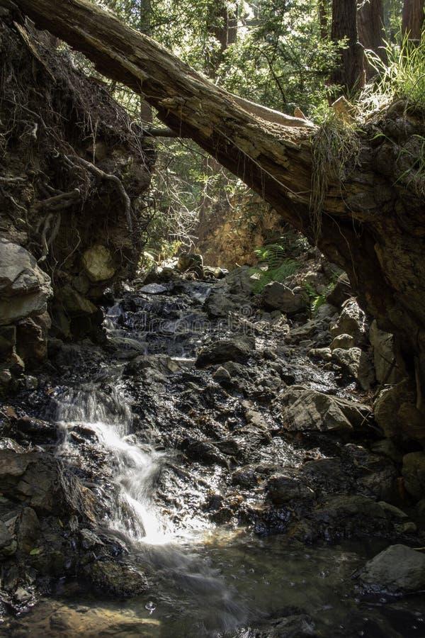倾斜在小小河的树在森林里 免版税库存照片