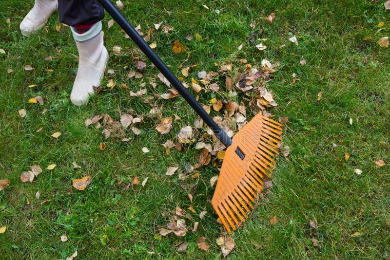 倾斜在草坪的人下落的叶子有爱好者犁耙的 免版税库存图片