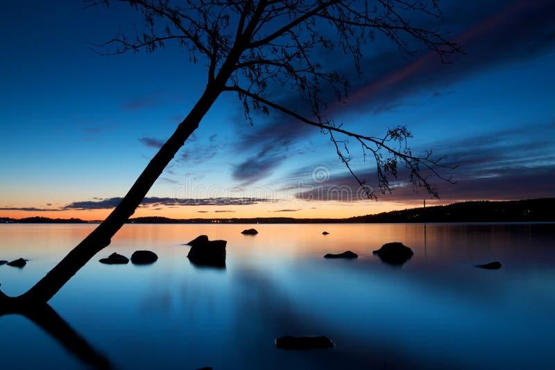 倾斜在Pyhajarvi湖的树剪影在坦佩雷 免版税库存图片