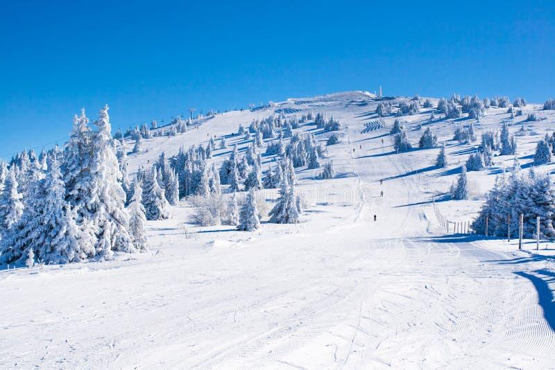 倾斜的充满活力的全景在滑雪胜地Kopaonik,塞尔维亚,滑雪的人们,雪树,蓝天的 免版税图库摄影
