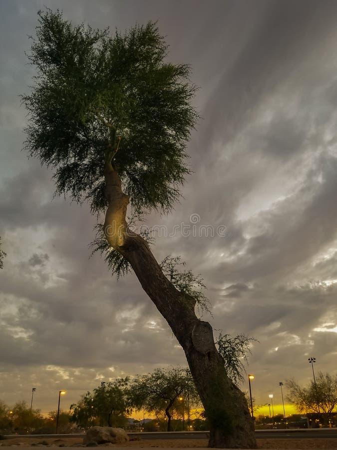 倾斜的日落树 库存图片