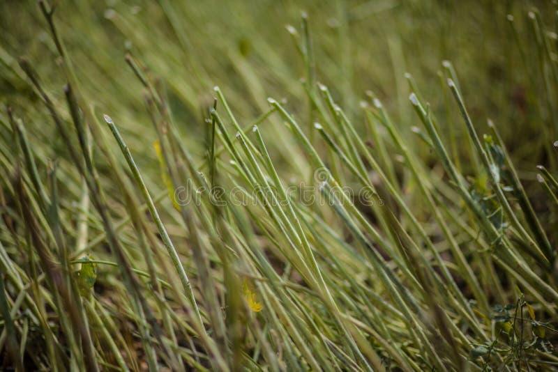 倾斜的植物的绿色领域 免版税图库摄影