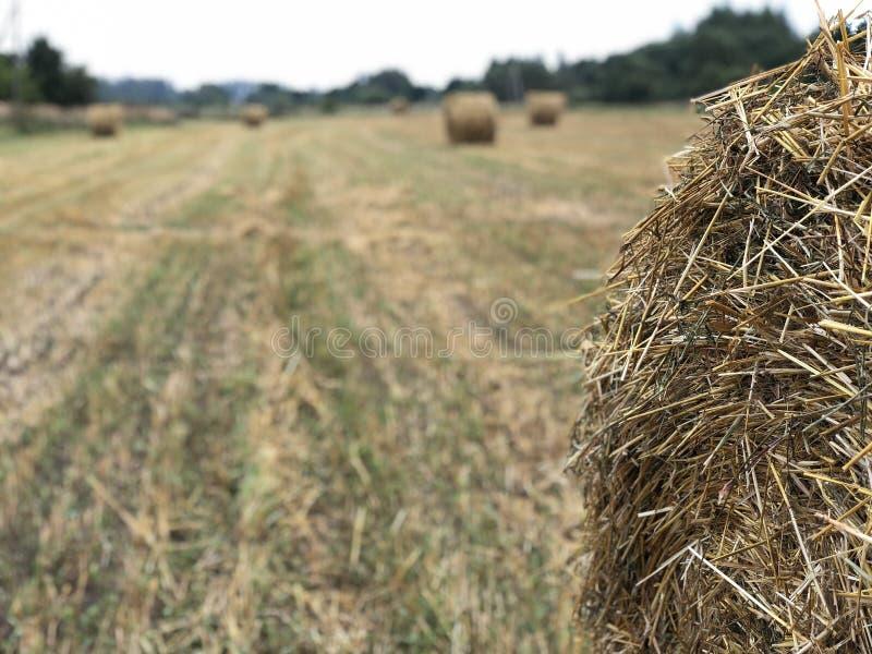 倾斜的领域的干草堆 免版税库存照片