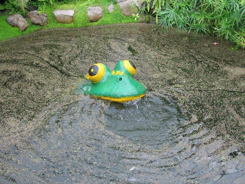 假塑料青蛙 库存照片