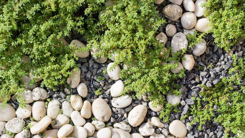 假山花园背景顶视图 免版税图库摄影