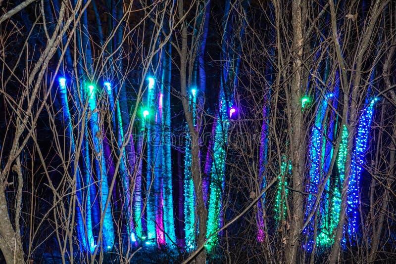假日光展示的蓝色和紫色冰柱森林 免版税库存照片