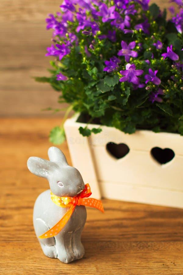 假日复活节兔子和美丽的花风轮草 库存图片