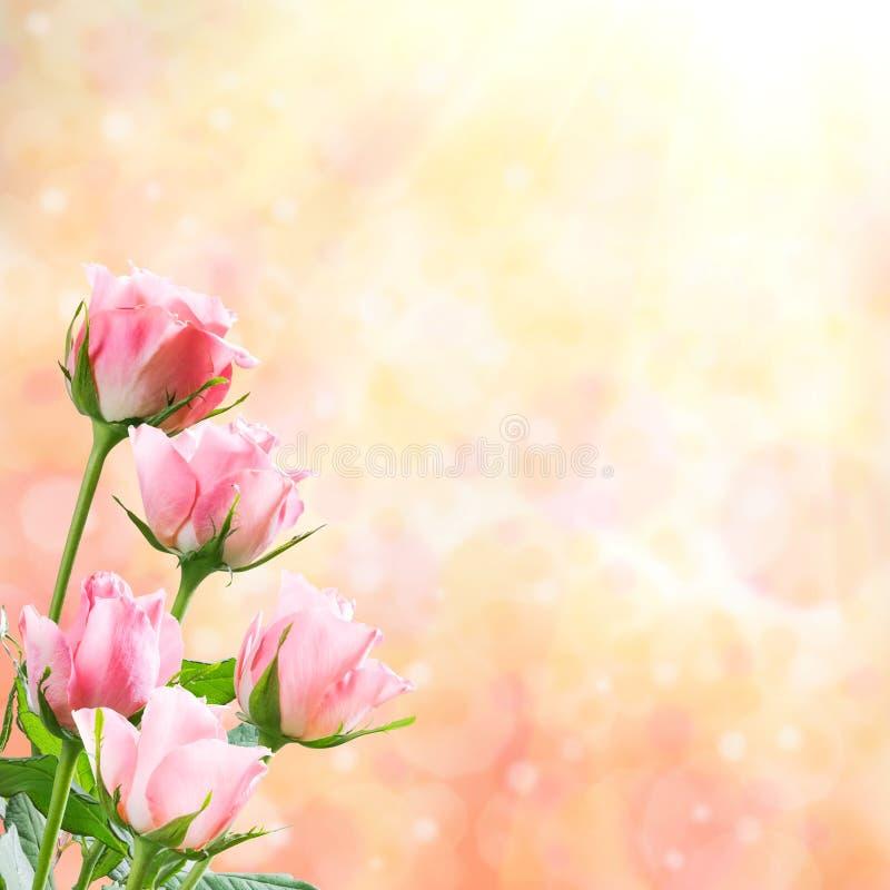 假日自然花卉背景 库存图片