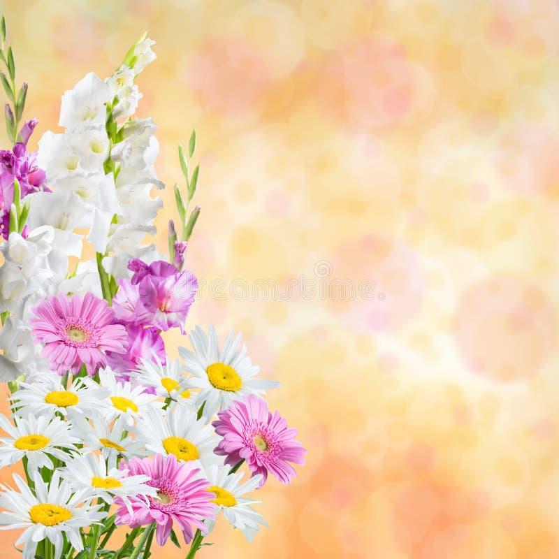 假日自然花卉背景 库存照片