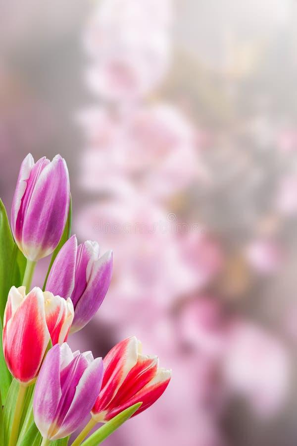假日自然花卉背景 免版税库存图片