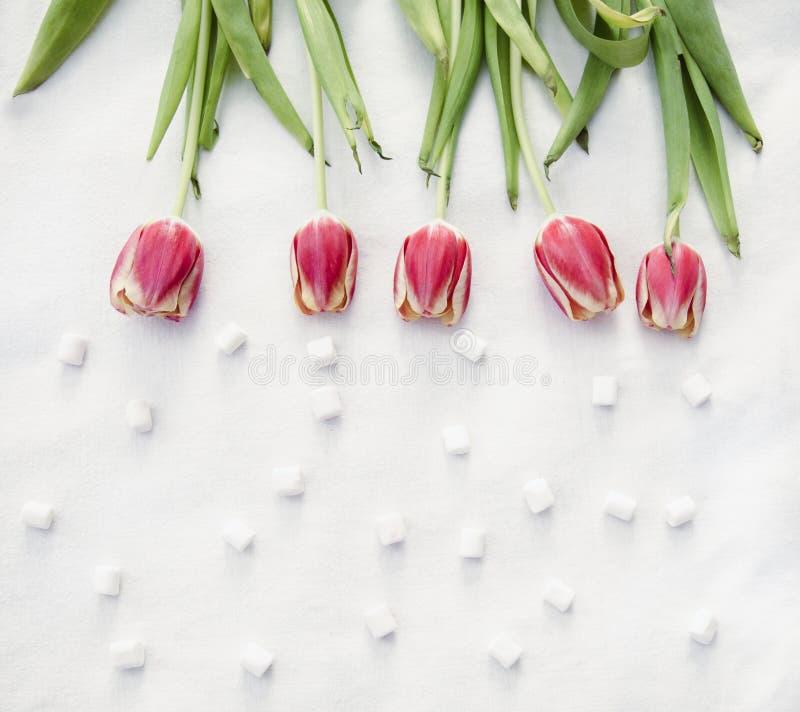 假日郁金香红色桃红色黄色和绿色 库存图片