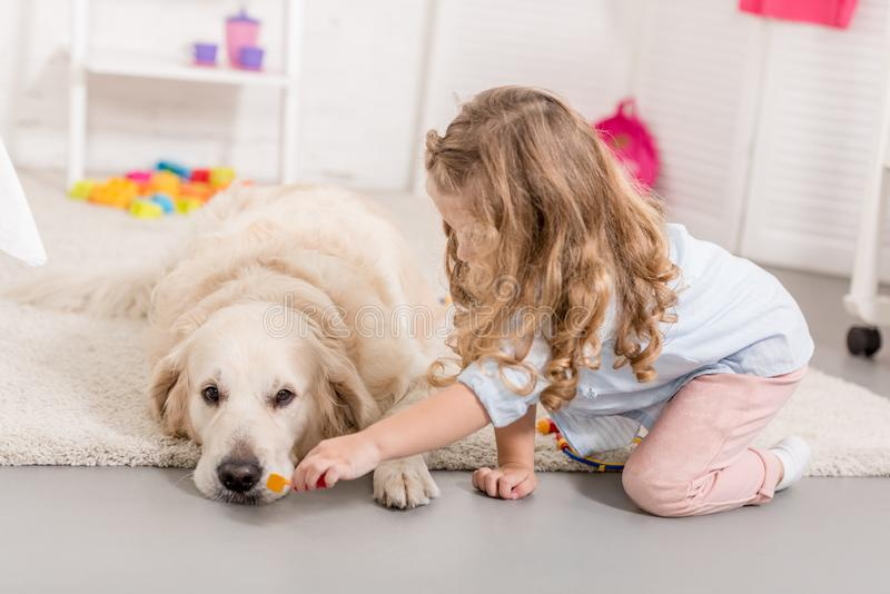 假装兽医和审查逗人喜爱的金毛猎犬的可爱的孩子 库存照片