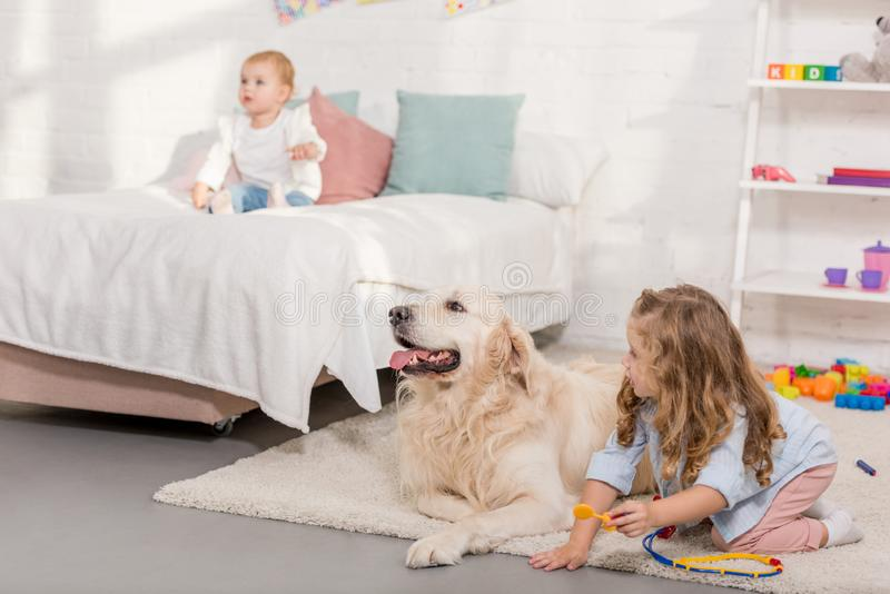 假装兽医和审查金毛猎犬的可爱的学龄前儿童 免版税图库摄影