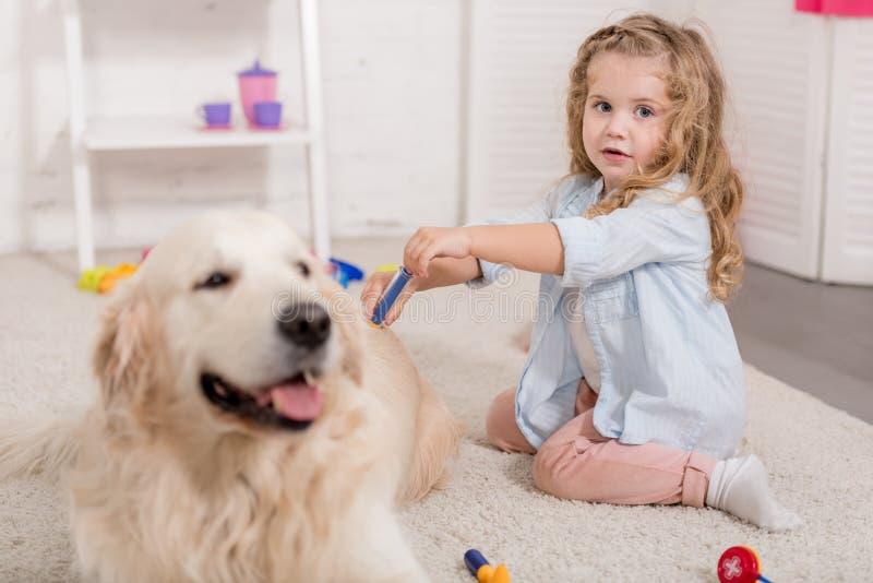 假装兽医和审查金毛猎犬的可爱的学龄前儿童 库存图片