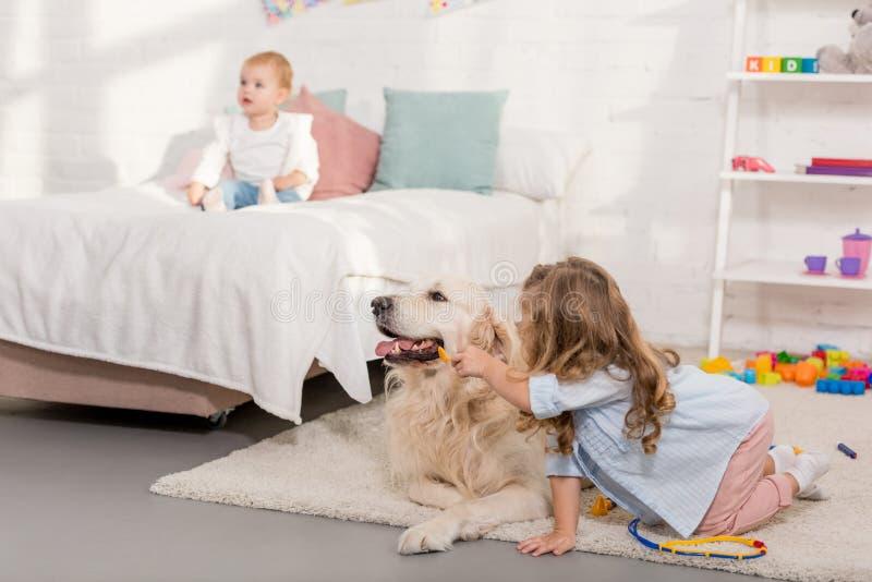 假装兽医和审查金毛猎犬的可爱的孩子 免版税库存照片