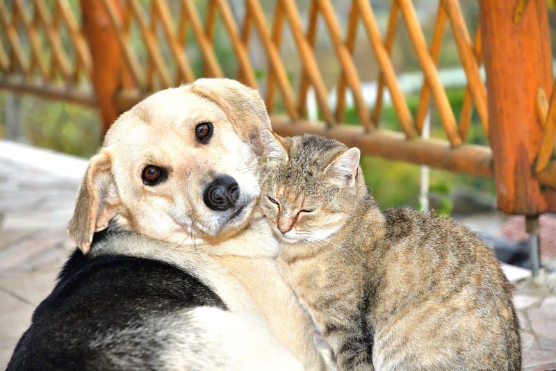 偎依的狗和猫在动物爱最好的朋友中 免版税库存照片