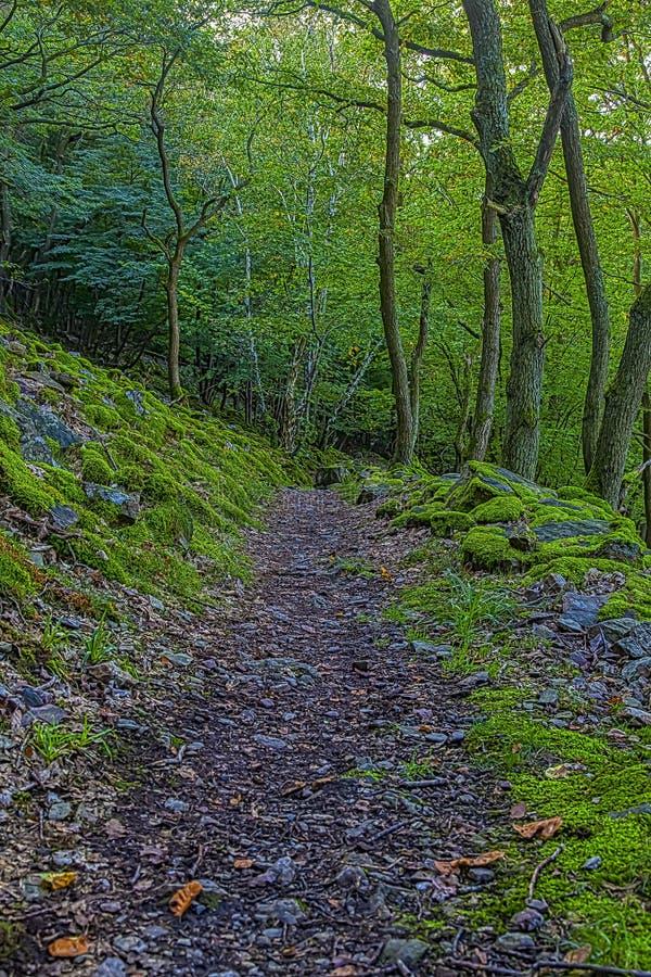 偏僻的供徒步旅行的小道在河莱茵河地区 库存照片