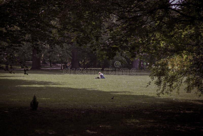 偏僻的女孩看书在树中的大公园 库存图片