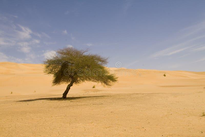 偏僻的撒哈拉大沙漠结构树 库存照片