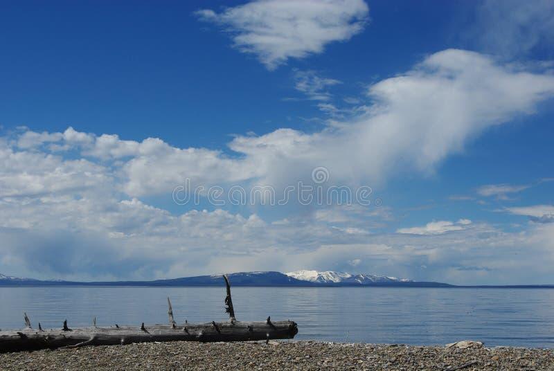 偏僻的日志,湖黄石,怀俄明 库存图片