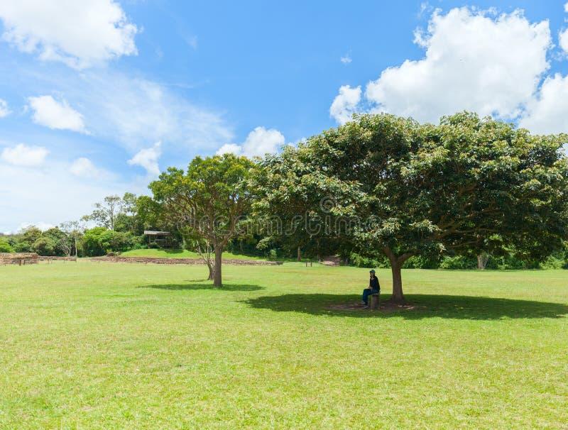 偏僻的树和妇女在树冠的树荫下坐一热的好日子 库存照片