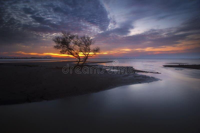 偏僻的树和日落 免版税图库摄影