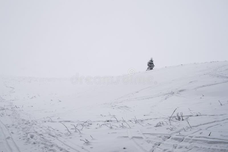 偏僻的树在冬天 免版税库存照片