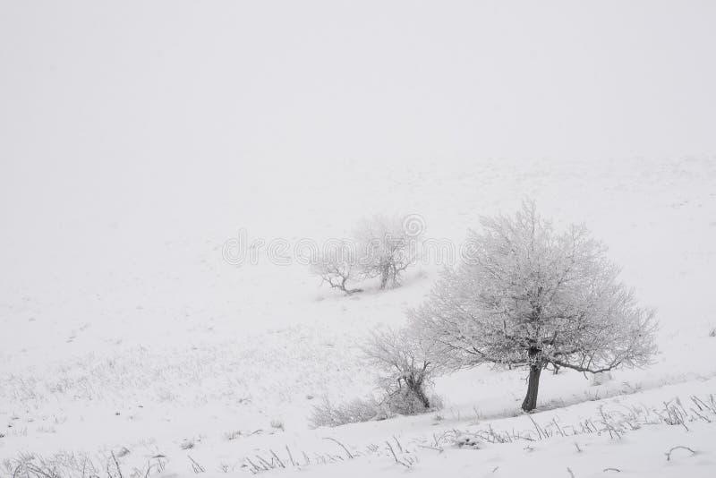 偏僻的树在冬天 免版税图库摄影
