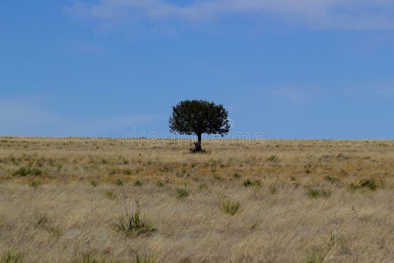 偏僻的树在反对天空的沙漠-美国 免版税库存照片