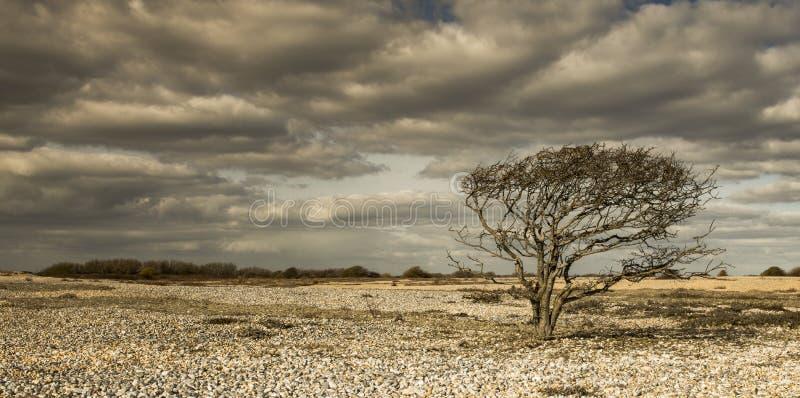偏僻的树在岩石沙漠  免版税库存图片