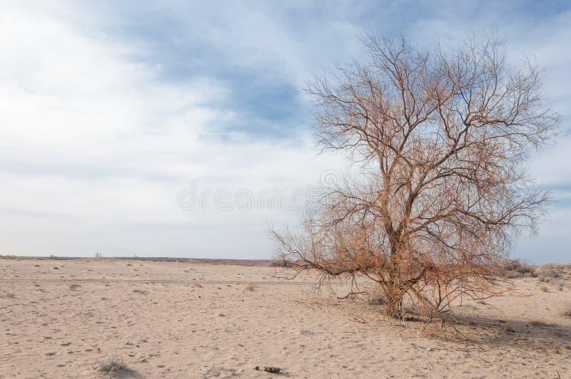 偏僻的树在早期的春天 库存图片