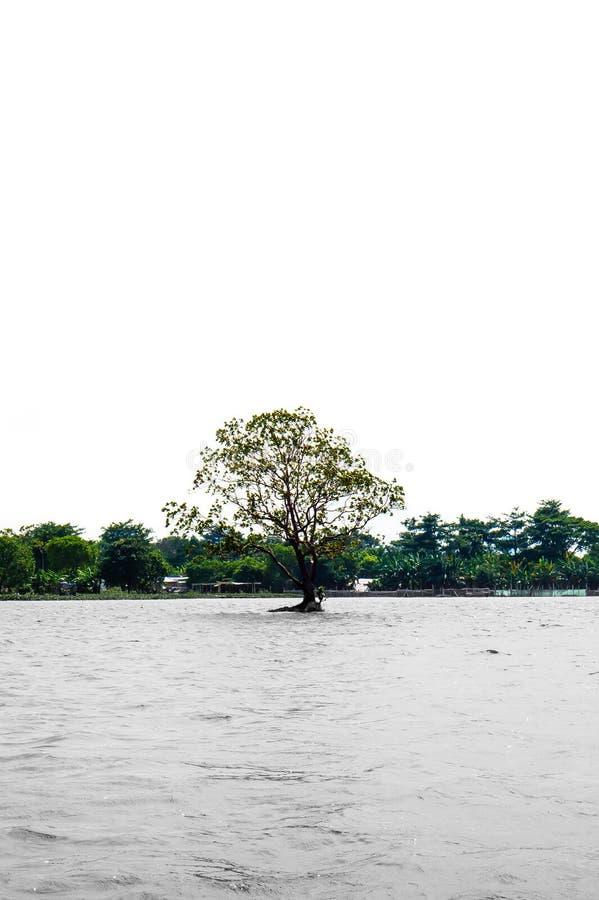 偏僻的树在湖的中心 库存照片