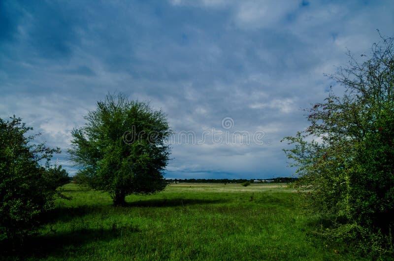 偏僻的树在风雨如磐的天空下 免版税图库摄影