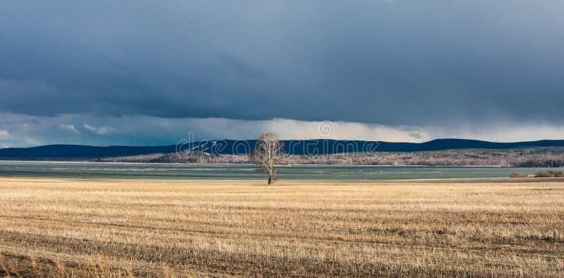 偏僻的桦树和云彩 免版税库存照片