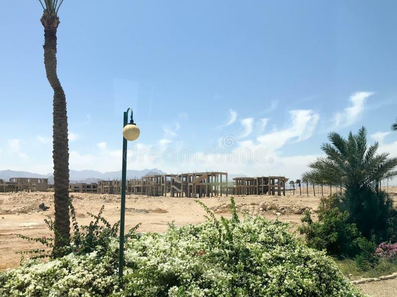 偏僻的热带棕榈树在沙漠在露天下在度假,在太阳下的热带,南部,温暖的手段在ag埃及 免版税库存照片
