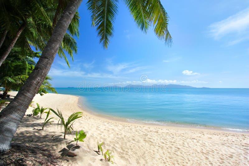 偏僻的白色沙滩,绿色棕榈树,蓝色海,明亮的晴朗的天空,白色云彩背景 免版税库存照片