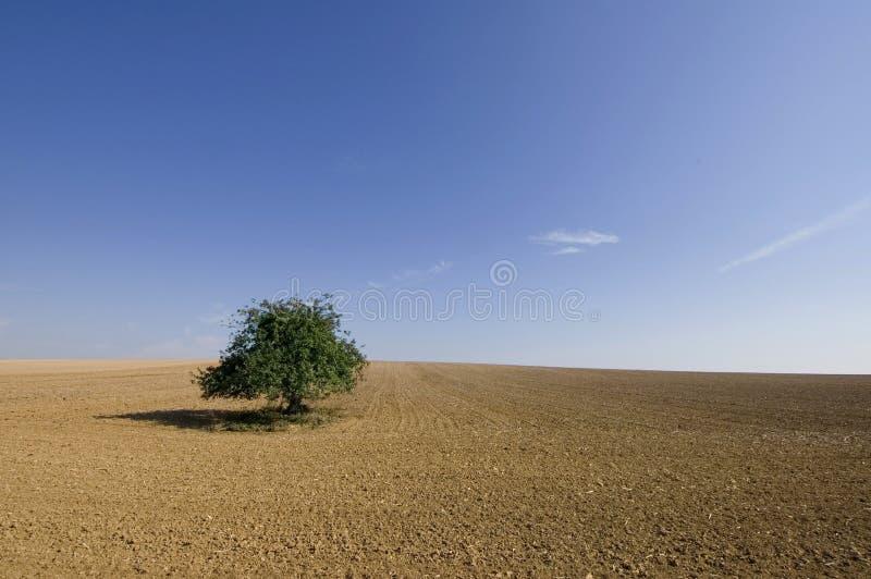 偏僻的结构树 图库摄影