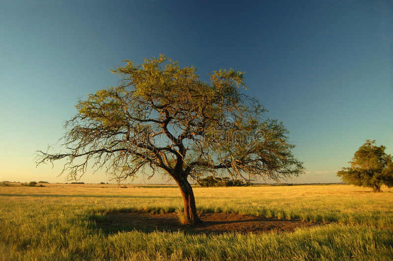 偏僻的结构树 免版税库存图片